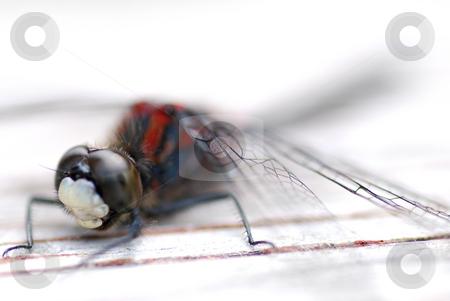 Dragon fly stock photo, Macro shoot of a dragon fly by Wolfgang Zintl