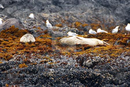 Sea lion stock photo, Sleeping sealion by Wolfgang Zintl