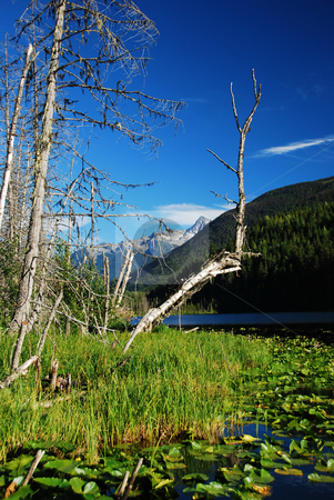 Coast mountains stock photo, Coast mountains in canada british columbia by Wolfgang Zintl