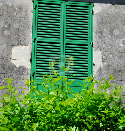 Window stock photo, closed green window with a green bush by Wolfgang Zintl