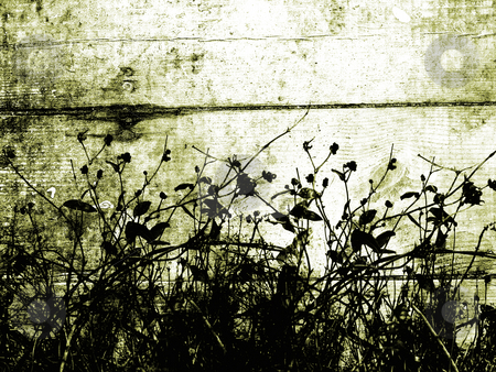 Foliage grunge stock photo, Foliage silhouette on grunge background by Kirsty Pargeter