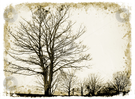 Grunge trees stock photo, Grunge trees on grunge background by Kirsty Pargeter