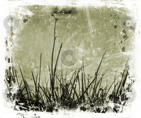 Grunge nature stock photo, Grass and foliage on grunge background by Kirsty Pargeter