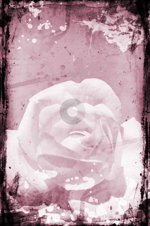 Grunge rose stock photo, Rose on grunge background by Kirsty Pargeter