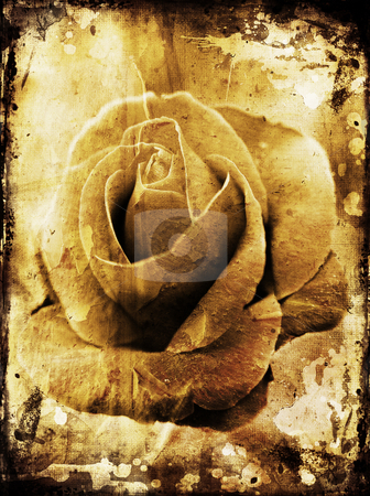 Grunge rose stock photo, Rose photo on grunge background by Kirsty Pargeter