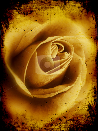 Grunge rose stock photo, Detailed grunge background with rose image by Kirsty Pargeter