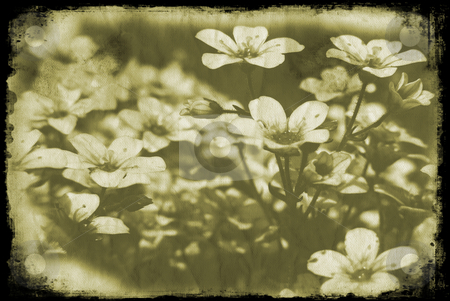 Grunge flowers stock photo, Flowers on grunge style background by Kirsty Pargeter