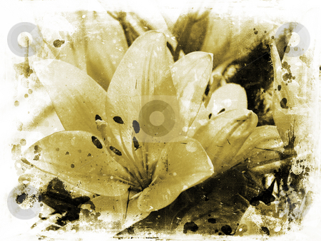 Grunge lillies stock photo, Background of lillies on grunge by Kirsty Pargeter