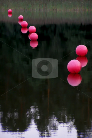 Pink buoys stock photo, Row of rose buoys on smooth water by Sergej Razvodovskij