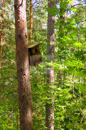 Birdhouse stock photo, A starling-house is fastened on a pine-tree in the spring sun forest by Sergej Razvodovskij