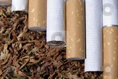 Tobacco and cigarete stock photo, Spilled tobacco and cigarete by Sergej Razvodovskij