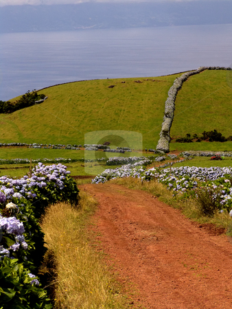 Road stock photo, Read road in azores by Rui Vale de Sousa