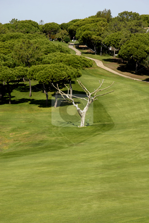 Field stock photo, Detail of a golf field in the south of portugal by Rui Vale de Sousa