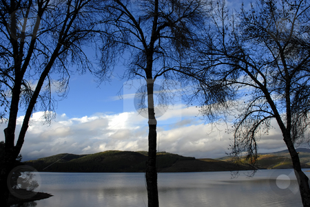 Trees stock photo, Trees in silhouette at the blue lake by Rui Vale de Sousa