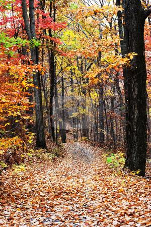 Autumn Road stock photo, A road through a autumn forest by Matt Baker