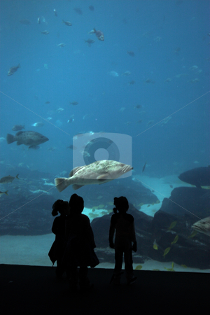 Girls looking at fish stock photo, A group of girls stand in front of a large aquarium by Matt Baker