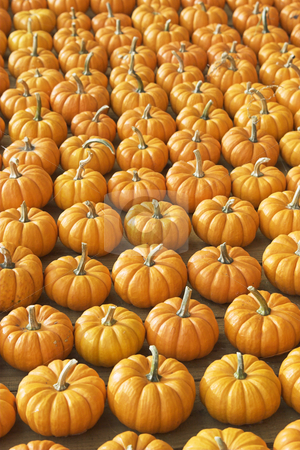 Many many pumpkins stock photo,  by Matt Baker