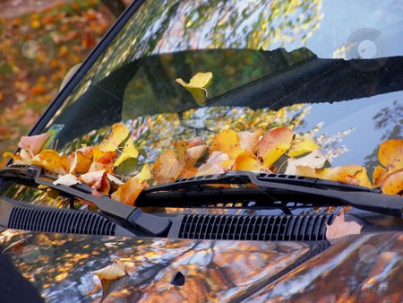 Fall on the car stock photo, Dead leaves on the windshield by Sergej Razvodovskij