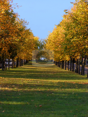 Autumn linden alley stock photo, Line of autumn trees with yellow colored foliage by Sergej Razvodovskij