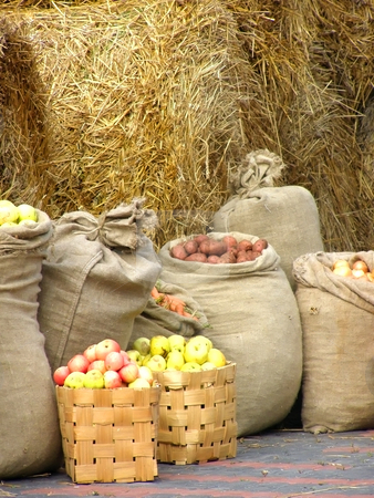 Harvest stock photo, Sacks of potatoes, apples,carrots,onion against the hay background by Sergej Razvodovskij