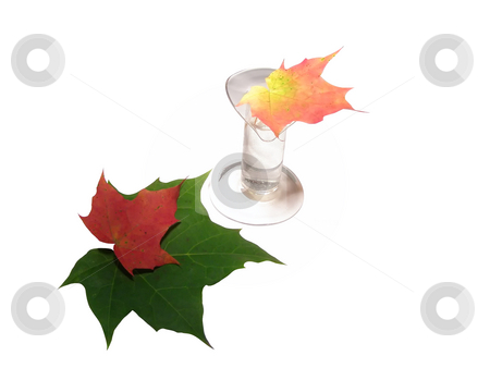 Autumn bouquet stock photo, Multicolored autumn leaves in vase and beside it by Sergej Razvodovskij