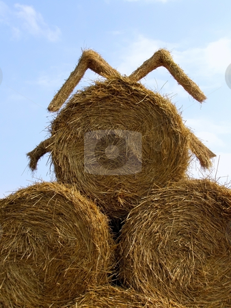 Sheaf of hay stock photo, Round sheafs of hay against sky background by Sergej Razvodovskij
