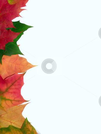 Autumn border stock photo, Border from autumn maple leafes by Sergej Razvodovskij