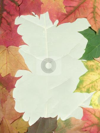 Autumn frame stock photo, Frame from autumn maple leaves by Sergej Razvodovskij