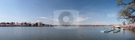 Panorama of Tidal basin with cherry blossoms stock photo, Expansive panorama of the Tidal Basin in Washington DC with the Jefferson Memorial in the foreground by Steven Heap