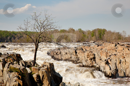 Gaunt tree in front of Great Falls stock photo, Great Falls on the Potomac near Washington with a small tree struggling to survive on the rocks by Steven Heap