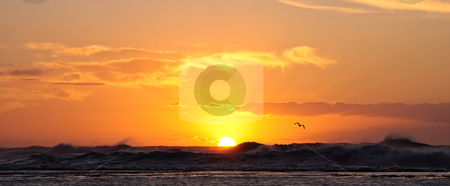Sun setting over stormy ocean with a bird stock photo, Bird swooping over the stormy sea at sunset by Steven Heap