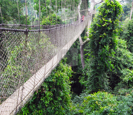 Aerial walkway at Kakum in Ghana stock photo, Aerial walkway disappearing into the distance across the rain forest in Ghana by Steven Heap