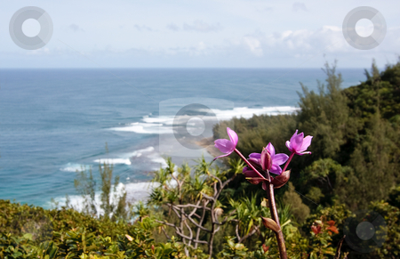 Purple flower over blurred image of Ke'e beach stock photo, Ke'e beach framed by a purple flower in the foreground by Steven Heap