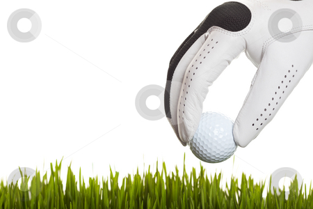 Found My Golf Ball stock photo, A golfer finds his ball in the grass. by Brenda Carson