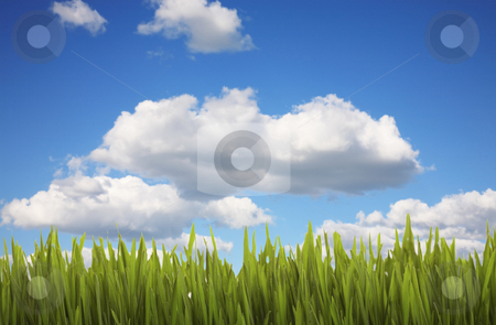 Grass and Cloudy Sky stock photo, Lush green grass against a cloudy, blue sky. by Brenda Carson
