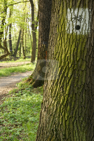 Bicycle path stock photo, Bicycle path in forest and sign on tree by Jolanta Dabrowska