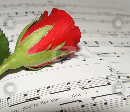 Rose with Music Notes stock photo,  by Kirsty Pargeter
