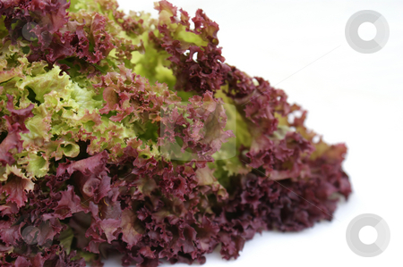 Curly lettuce stock photo, Close up shot of a curly lettuce by Kirsty Pargeter