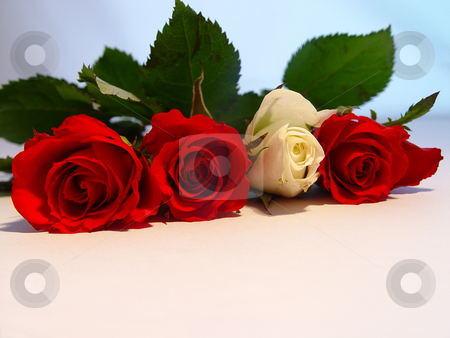 Valentine Roses stock photo,  by Kirsty Pargeter