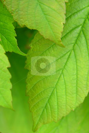 Green leaves close up stock photo,  by Kirsty Pargeter