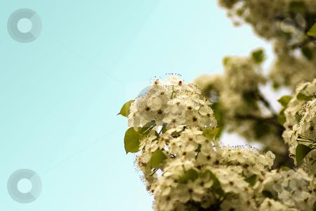 White flower stock photo, Close up of white flower by Fabio Alcini