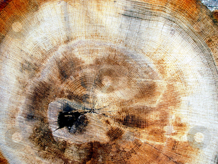 Woodgrain stock photo, Texture of fibers in wood by Jack Schiffer