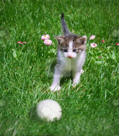 Kitten and ball stock photo, A kitten playing with a ball in the grass. by Ivan Paunovic