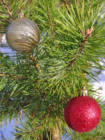 Christmas balls on the tree stock photo, Decoration balls on the christmas tree outdoor by Sergej Razvodovskij
