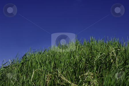 Green Grass stock photo, Green grass and sky for background. A nice clear summerday by Peter Soderstrom