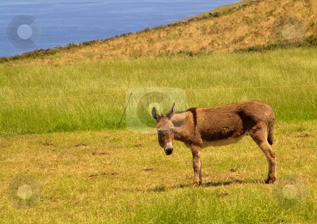 Donkey stock photo, Donkey in the field by Rui Vale de Sousa
