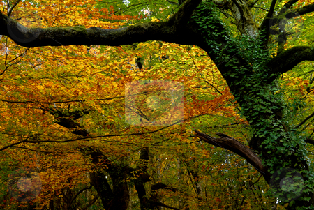 Autumn stock photo, Autumn at the forest, portuguese national park by Rui Vale de Sousa