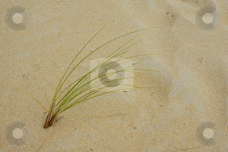 Plant stock photo, Small vegetation in the north spanish desert by Rui Vale de Sousa