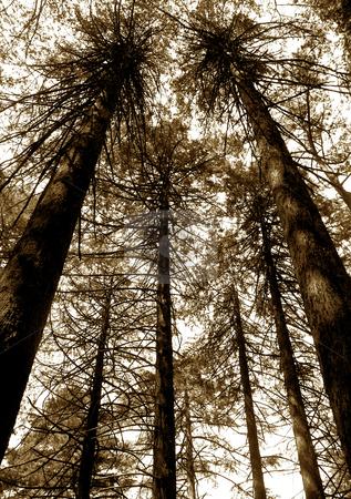 Trees stock photo, Trees detail by Rui Vale de Sousa