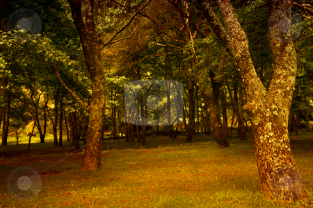 Forest stock photo, Path with trees in azores, s miguel island by Rui Vale de Sousa